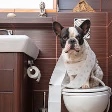 Potty Training for dogs!