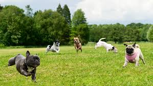 Training in dog parks