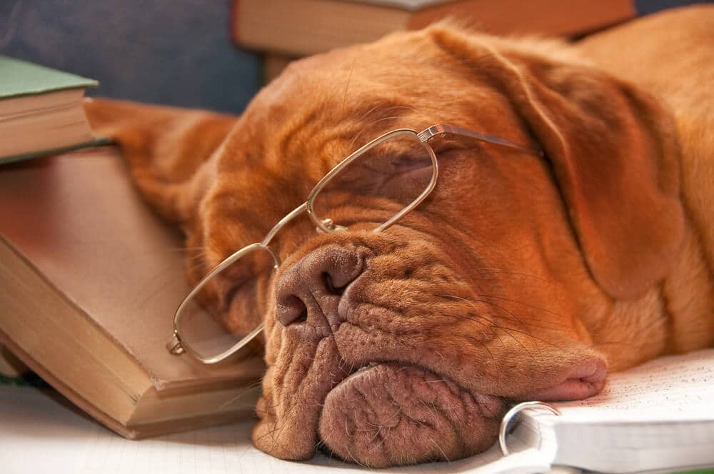 Dog sleeping on a pile of books
