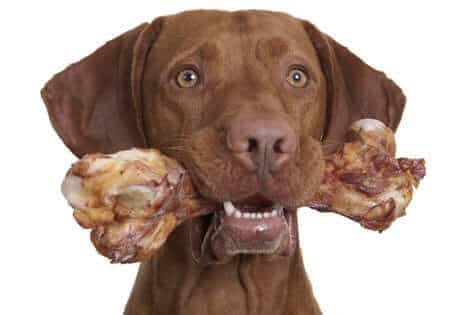 Dog with a raw bone in his mouth