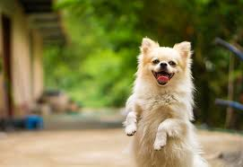 Picture of a happy dog