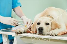 Dog receiving treatment