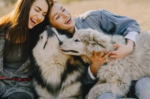 Husky dogs showing love to happy girlfriends