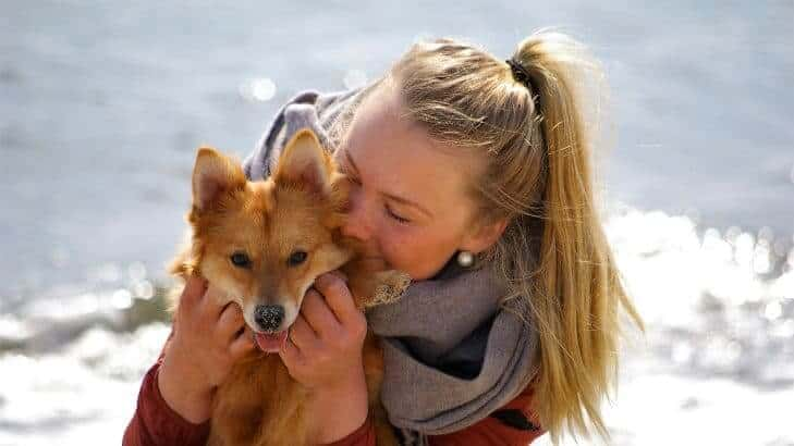 Woman hugging her Finnish Spitz