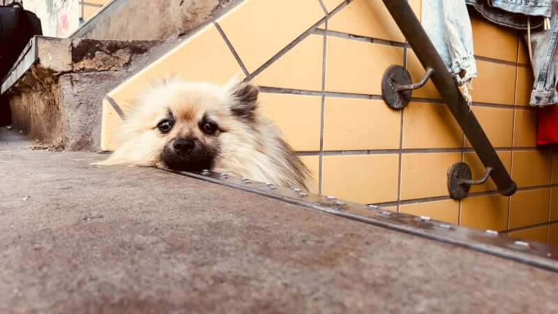 Little dog laying on public city stairs
