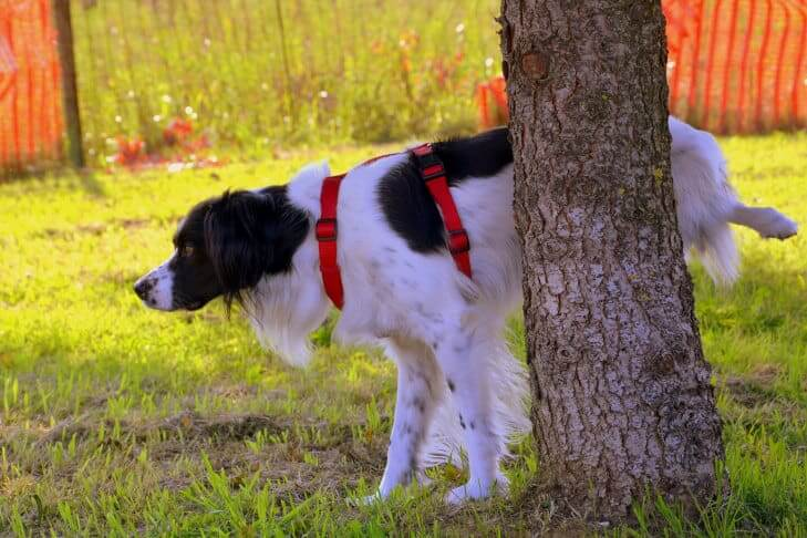 dog peeing to a tree