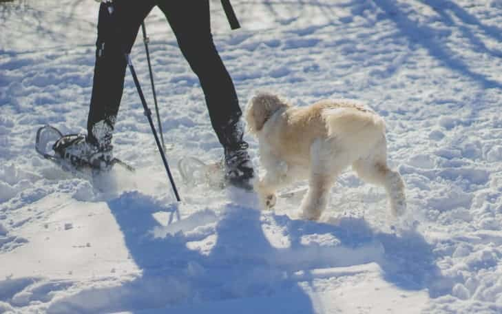 Man walking in the snow with his dog